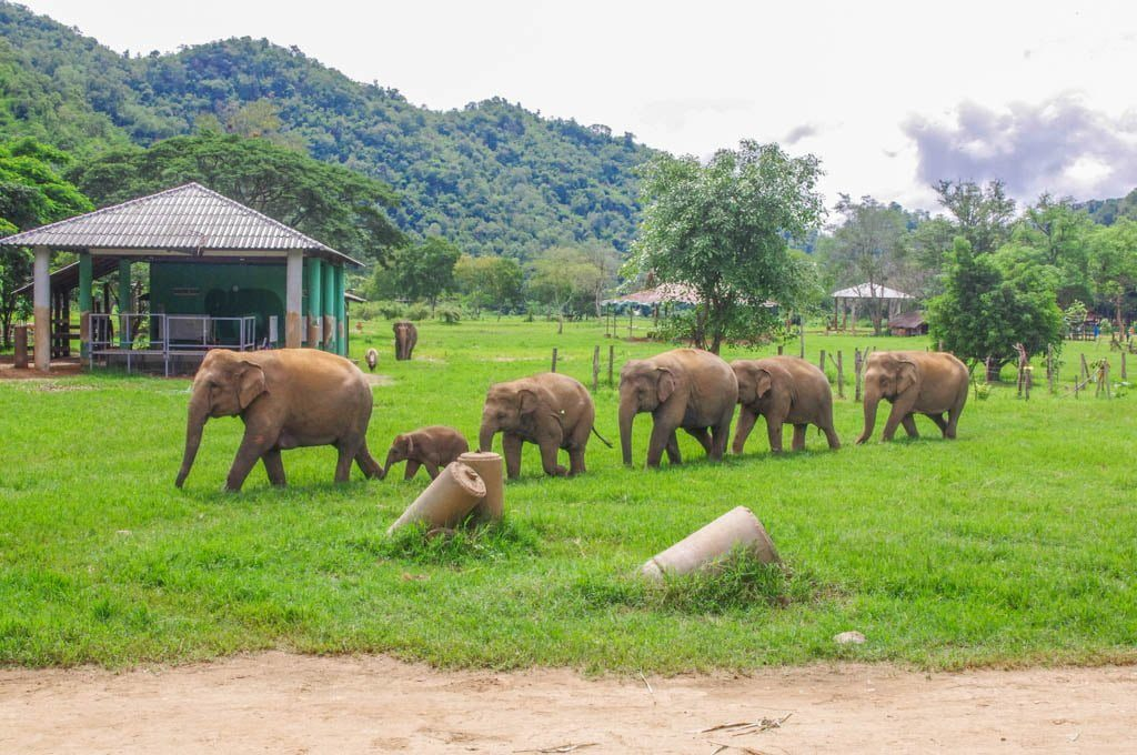 Don't Leave Chiang Mai Without Trying I Elephant Nature Park I 5 Unique Things to do in Chiang Mai