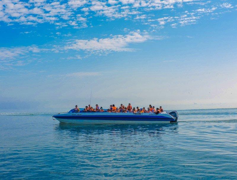 Isas Ballestas Peru boat trip