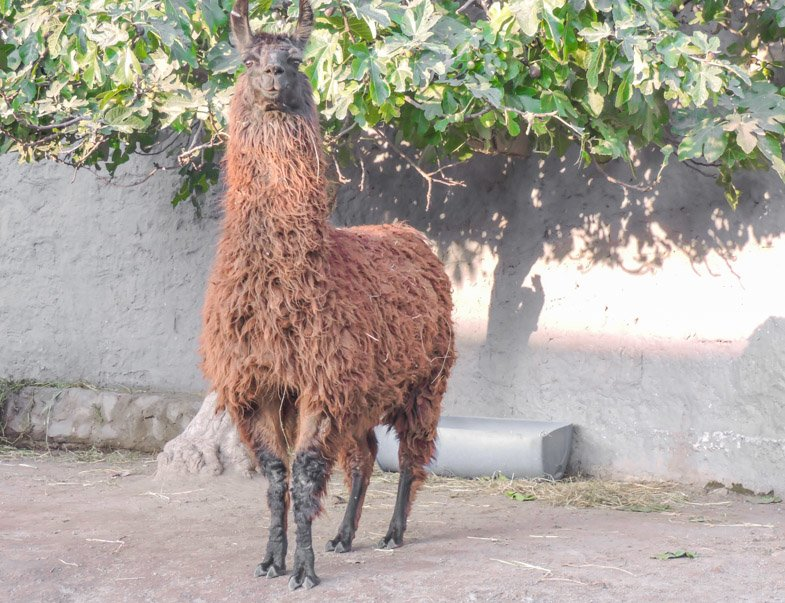 Mundo Alpaca | Arequipa attractions