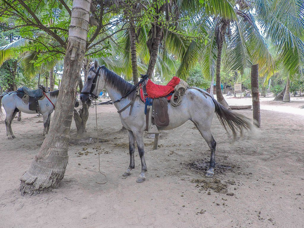 Horses I Tayrona National Park I Colombia