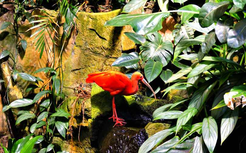 Bird Vancouver Aquarium Photo of the Fortnight 11