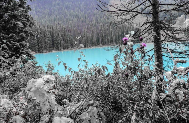 Emerald Lake Thistle Alberta Rockies Photo of the Fortnight 13