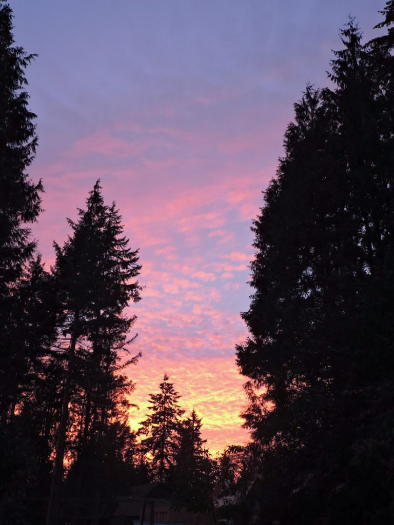 Roberts Creek Provincial Park trees with striking sunset of orange and pink