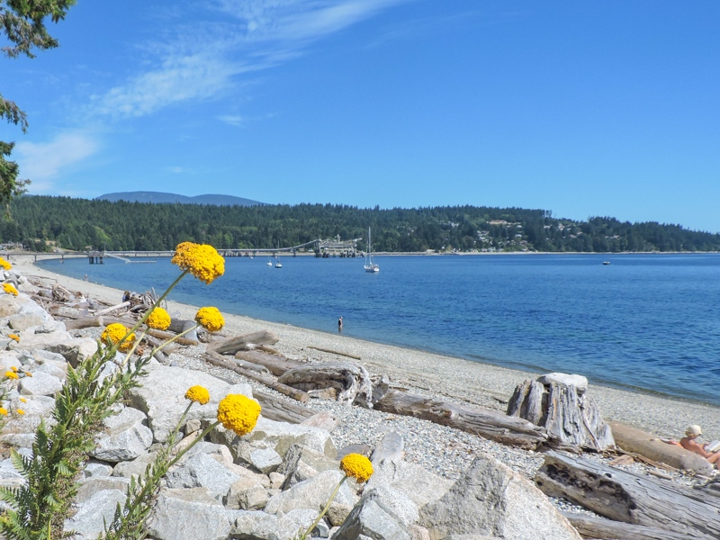 Sechelt waterfront with yellow flowers_