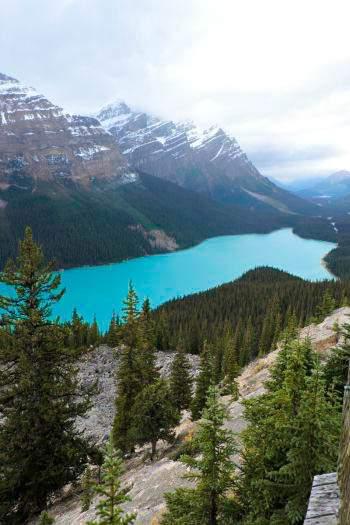 Canadian Rockies Lakes - Peyto Lakes