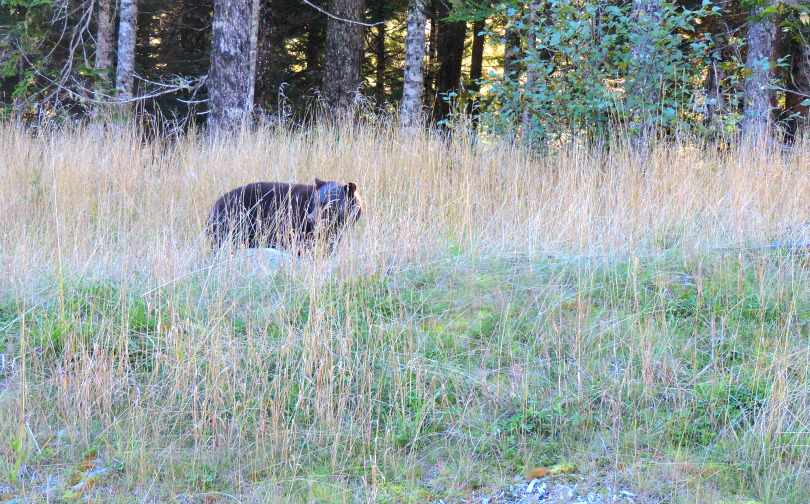 Whistler Bear Sighting, Girls' Weekend in Vancouver