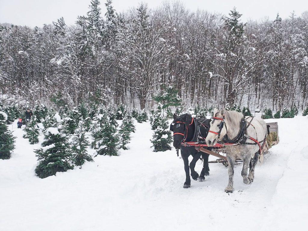 Vermont Horses Snow Christmas