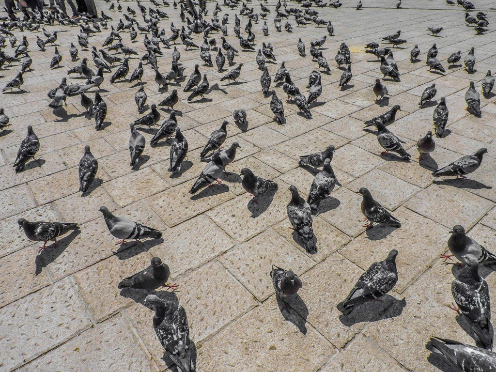 Pigeons I Sarajevo Where To Stay and What To Do