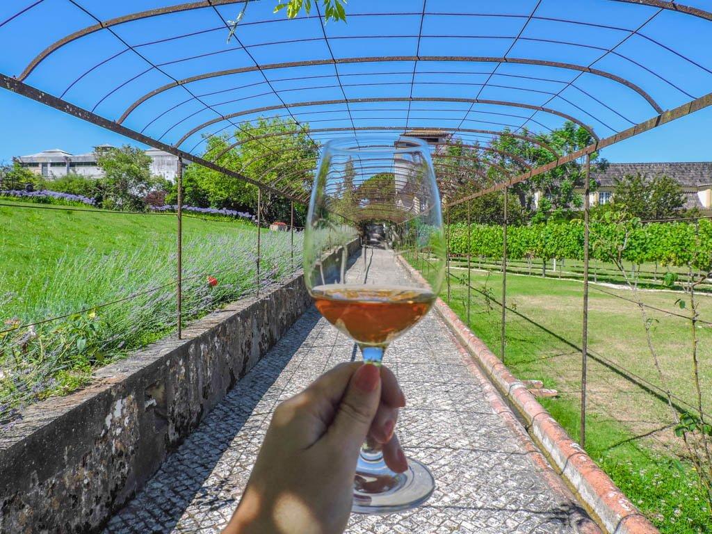 Wine glass against a vineyard backdrop