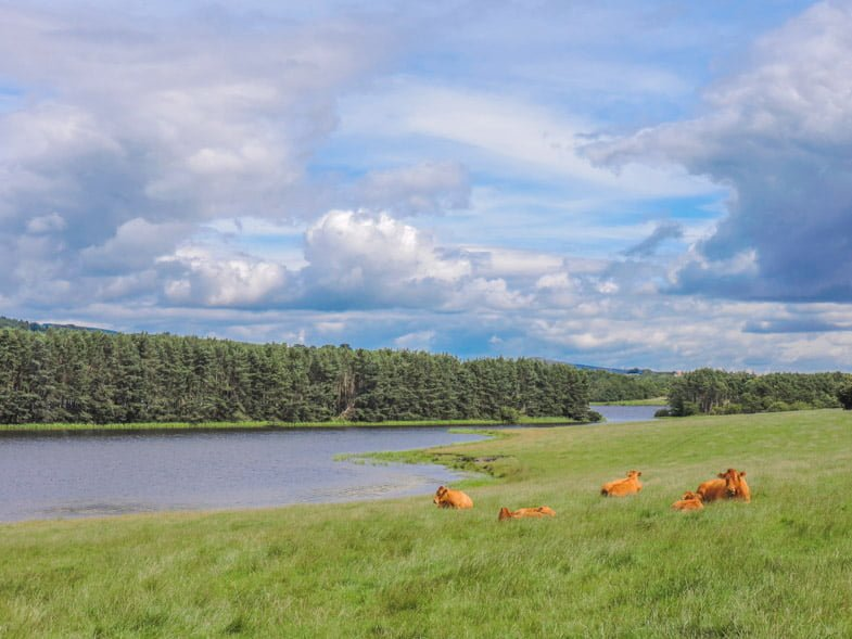 Lochore Meadows | Fife Points of Interest