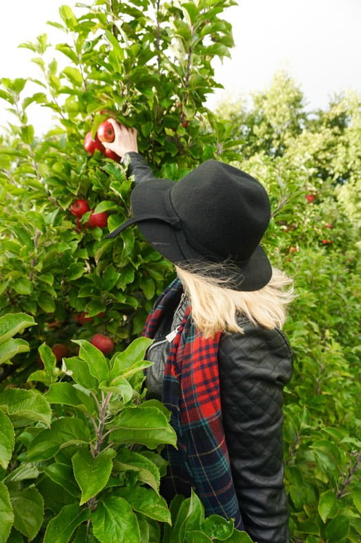 The Apple Farm | 5 days in Ireland itinerary: Ireland's Ancient East