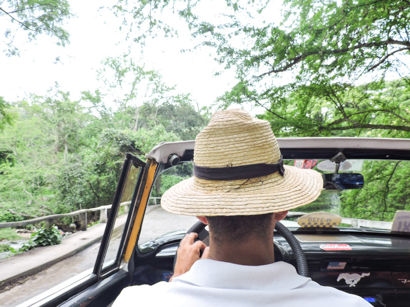 Havana Forest Car Ride