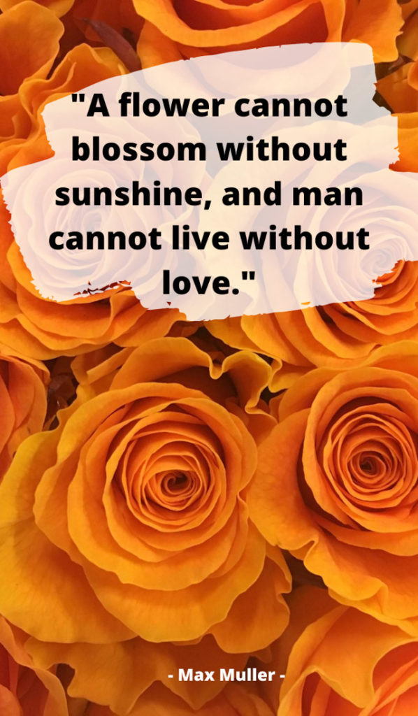 80 Quotes About Sunshine For Motivation Instagram Pinterest